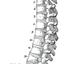 脊柱.pngのサムネール画像