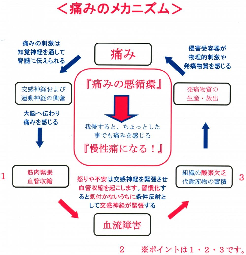 痛みのメカニズム.jpg