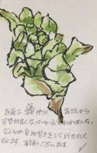 IMG_0101お礼状裏re.jpg